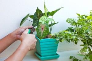 Houseplants clean the air